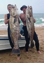Daga Salmon(kob) - Clive Hockly(31.5) and Graeme Duane(23.8) shot these beauties at salt rock